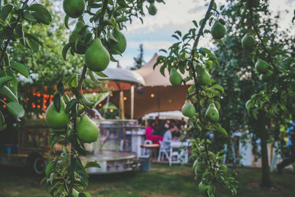 Perenbomen als decor op de evenementenlocatie